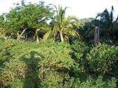 """""""Здесь, кажется, кто-то есть!"""" Джунгли на прибрежном склоне о.Нуси-Бе, северный Мадагаскар.  Фото Игоря Сида."""