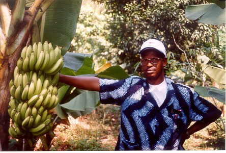 http://www.africana.ru/lands/Guinea/photo/father_with_bananas.jpg